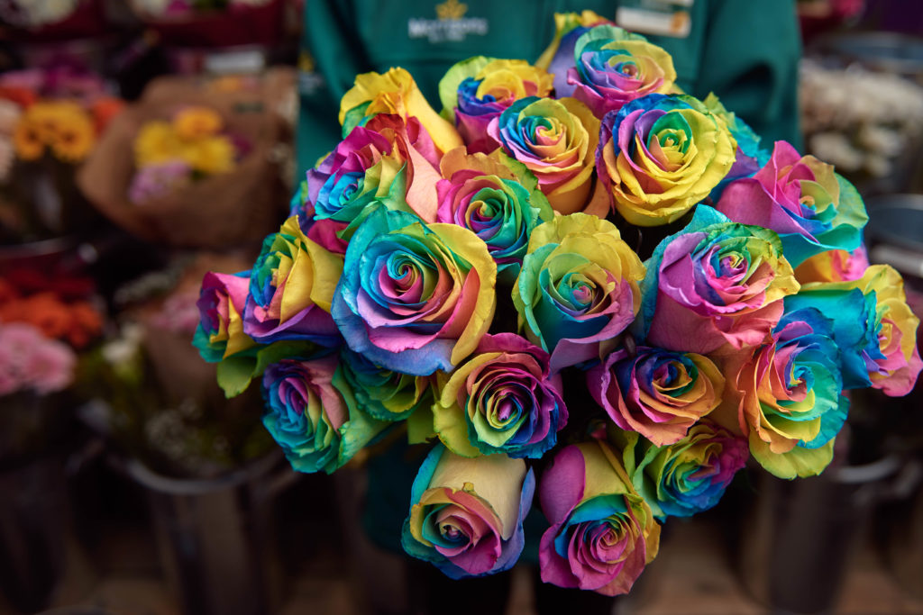 The rainbow roses will be sold for Valentine''s Day, and support homeless LGBT youth.