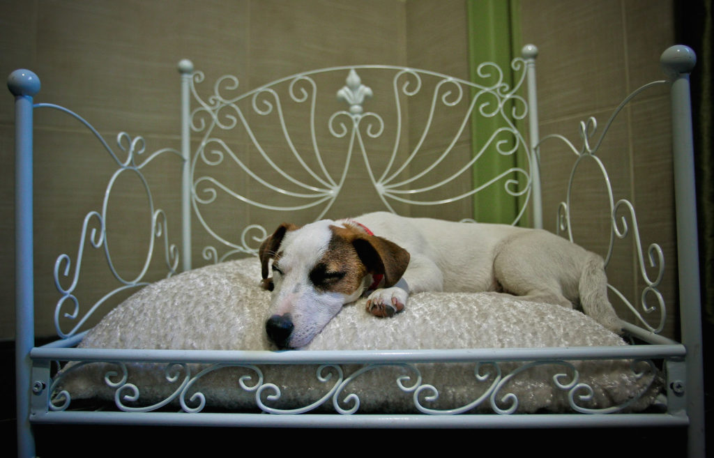 Luxury Dogs Hotel