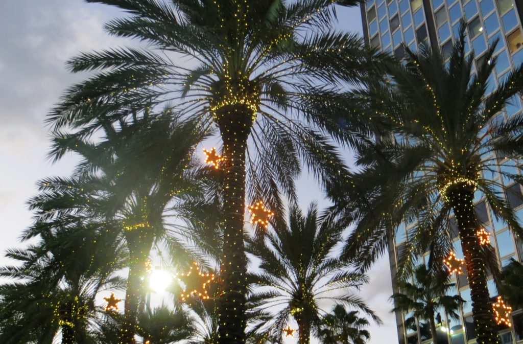 Christmas quiz: Christmas palm trees