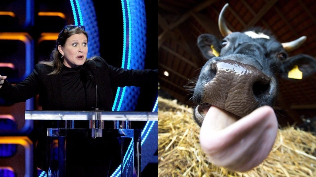 Carrie Fisher and a cow tongue