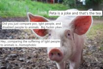 A photo of a pig overlaid with tweets responding to PETA's tweets