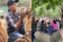 Jeff Lowe cuddles-up with big cats (L) as countless victors crowd the Tiger King Park for its grand re-opening. (Screen captures via Instagram)