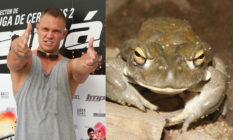 Spanish porn star Nacho Vidal (L) and the bufo alvarius toad. (Carlos Alvarez/Getty Images/Wikimedia Commons)