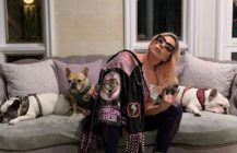 Lady Gaga dogs stolen