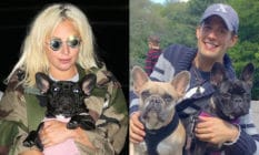 Lady Gaga in a camouflage jacket holding a French bulldog. Ryan Fischer holding two dogs
