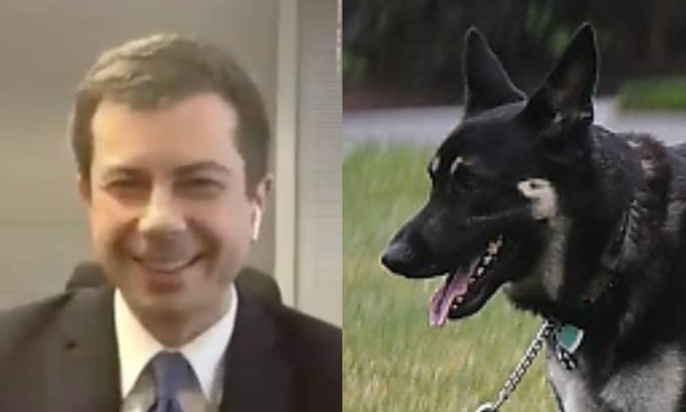On the left: Pete Buttigieg shows his hands to the camera while wearing a suit. On the right: Major, a German Shepard, pants while standing on a lawn